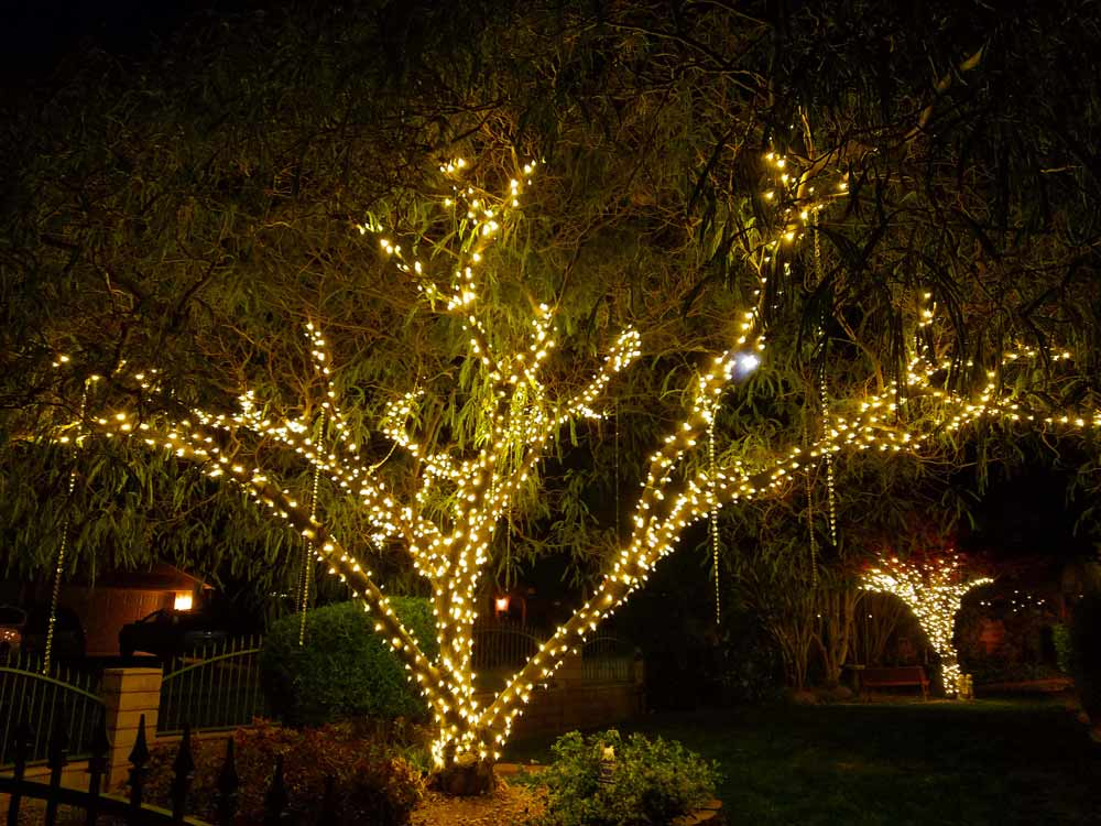 Wedding Tree Lighting
